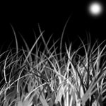Grass and Night Sky