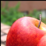 Fabulous Food - Outdoor Light