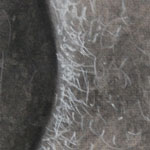 Charcoal Alpaca Magnified