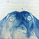 Cyanotype Dog