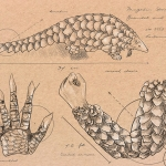 Concentration sketches - Pangolin Armour