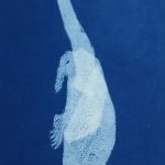 Developed Creatures - Cyanotype